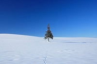 Tree in snowfield against blue sky