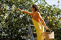 Woman lemon picking