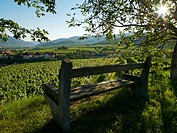 Bench in vineyard, Austria