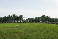 White ball on grass with palm trees in background