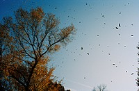 Leaves floating in sky