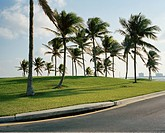 Palm trees on grass by roadside