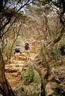 Two people hiking to Mount Kinabalu, Sabah, Borneo, Malaysia