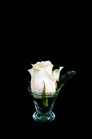A rose in a small glass