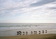 A group of people horseback riding on a beach