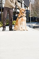 Blind man with guide dog on sidewalk