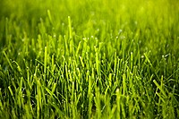 Close up image of grass