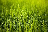 Close up image of grass
