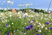 Flowers in a meadow.