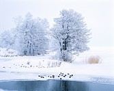 Ducks in frozen landscape