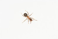 Ant on white background close_up