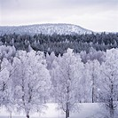 Snow_clad trees by mountain