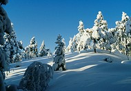 Snow_covered trees