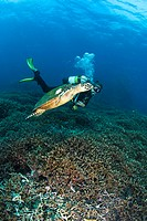 Scuba diver, Koh Ba_Ngu, Similan National Marine Park, Similan Islands, Thailand, Southeast Asia
