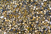 British Columbia, Canada, Close_up of shells and barnacles