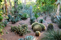 Morocco, Marrakech  Majorelle garden, cacti
