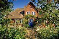 Typical thatched house with flower garden at Nebel, Amrum island, North Friesland, Schleswig_Holstein, Germany