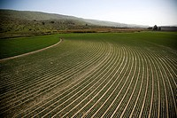 Aerial photograph of a green field in the Upper Galilee