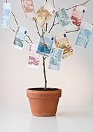 Money growing in a pot