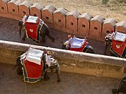 four mahouts riding on their elephants at Amber Fort, Amber, Jaipur, Rajasthan, India