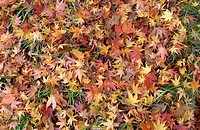 Fallen autumn leaves on grass