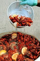 United States, Mississippi, Vicksburg, Crawfish Festival on the Mississippi River, crawfish broiling