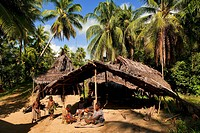 Papua New Guinea, East Sepik Province, region of Maprik, village of Kaminimbus, Ablonia Welu, Janu, Gajebuyo and Amugan are preparing the meal in fron...