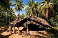 Papua New Guinea, East Sepik Province, region of Maprik, village of Kaminimbus, Ablonia Welu, Janu, Gajebuyo and Amugan are preparing the meal in fron...