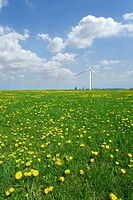 Field of spring dandelions with wind turbine in distance