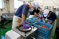 Men juicing tomatoes, Nagano prefecture, Japan