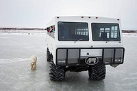 Tundra buggy and a Polar Bear (Ursus maritimus), Churchill, Canada (November 2005)