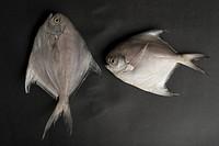 Close_up of raw fish