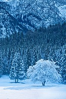 Snow and frost on trees Grainau, Bavaria, Germany