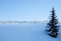 Winter landscape with fence and trees, Elmau, Bavaria, Germany