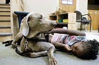 Animal therapy with pet dogs. Child playing with a dog at a centre that uses animal therapy to treat children who are at risk of, or who have suffered...