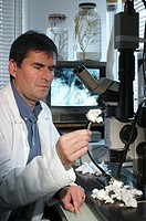 Marine bacteria in cancer research. Researcher Jean Guezennec using an endoscopic microscope to study polymers white produced by marine bacteria. He i...