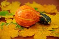 Herbststimmung _ Kürbisse auf Ahornblätter