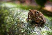 Tropical toad  Photographed in Panama