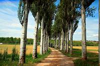 Country walk in Palencia, Castile province, Spain.