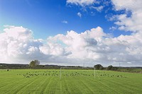 Brent Goose Branta bernicla flock feeding on football pitch, North Norfolk, England, november