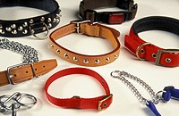 Domestic Dog, selection of different collars
