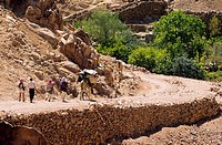 Egypt, Sinai Peninsula, Saint Catherine, Djebal Valley