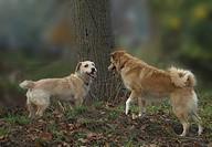 Hundebeziehung
