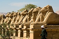 Egypt, Upper Egypt, Upper Egypt, Nile Valley, Luxor, Karnak listed as World Heritage by UNESCO, temple dedicated to Amon God, criosphinx alley lion bo...