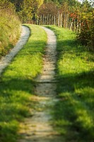Path through rural landscape