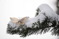 Golden decorative butterfly on snow_covered branch