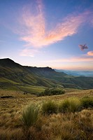 Windswept mountain grass in Elliot Mountains at dawn, Eastern Cape Province, South Africa