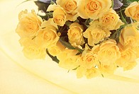 Close_up of yellow roses.