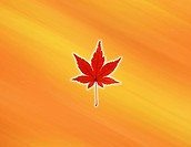 View of a maple leaf