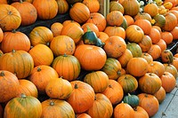 Pumpkin Cucurbita sp crop, harvested fruit for sale, England, autumn